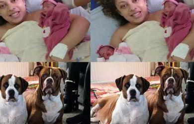 Tragis! Bayi Kembar Asal Brazil Meninggal Dunia Diterkam Anjing Peliharaan Sendiri