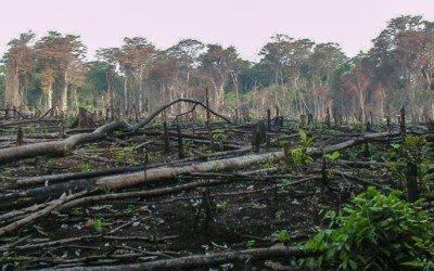 UU Cipta Kerja Mengancam Keberlangsungan Hutan